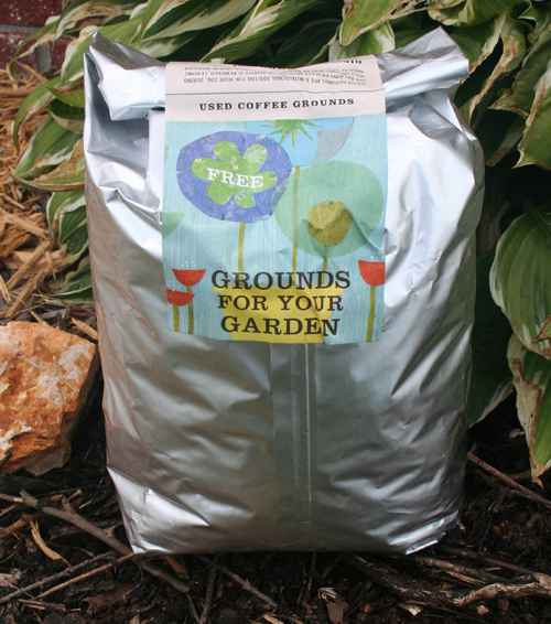 Starbucks grounds for your garden nancyc for How to use coffee grounds in garden