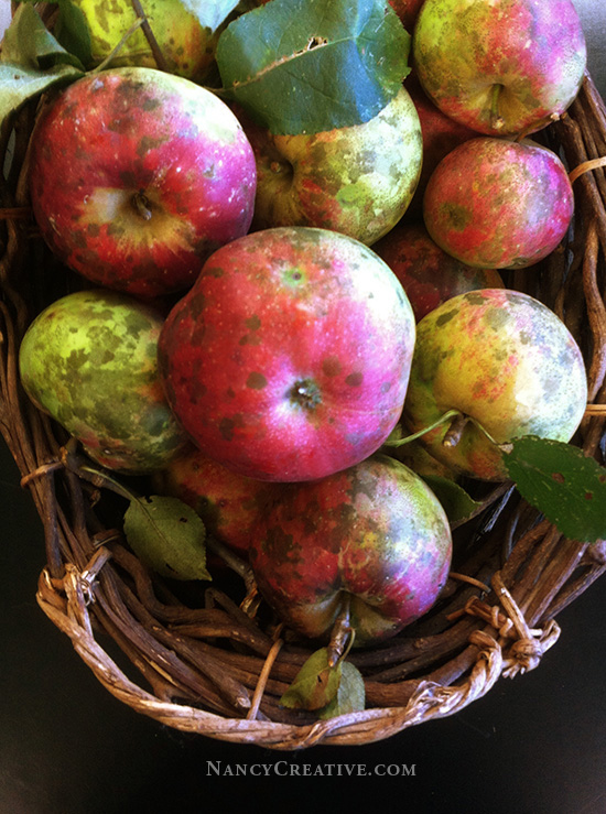 Rustic Apples @ NancyC